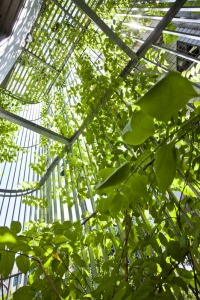 Green_Renovation_by_Vo_Trong_Nghia_dezeen_468_1